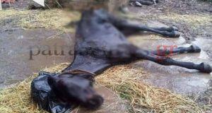 Κολαστήριο στο Ρίο – Νεκρά και υποσιτισμένα ζώα – Εικόνες…
