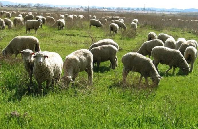Τροπολογίας για επιχορήγηση κτηνοτρόφων