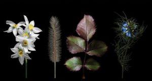 Αγρίνιο: Εγκαίνια Έκθεσης Σπύρου Γιολδάση – «Πορτρέτα Φυτών»