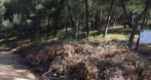 Αγρίνιο: Η Ανεξάρτητη Ενωτική Πρωτοβουλία για το δάσος του Αγίου…