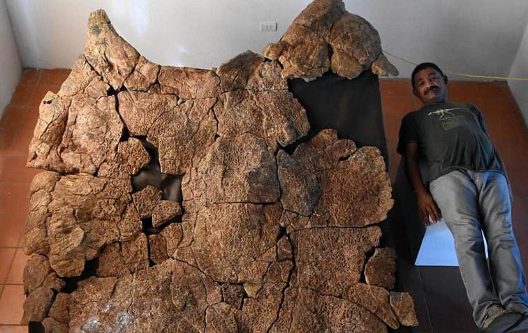 Ανακαλύφθηκαν απολιθώματα γιγάντιας χελώνας του γλυκού νερού