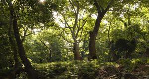 Δημ. Συμβούλιο Αμφιλοχίας: Ομόφωνη διαφωνία για την ανάρτηση Δασικών Χαρτών