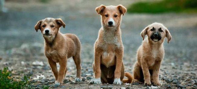 Η Φιλοζωική Οργάνωση Αγρινίου για την Παγκόσμια Ημέρα Αδέσποτων Ζώων