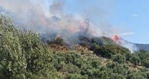 Μεσολόγγι: Καίγονται λιοστάσια στον Άγιο Θωμά