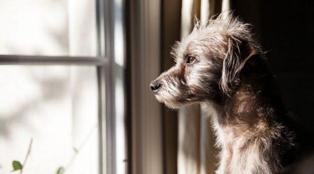 Δακρύζει ο σκύλος από στεναχώρια; Μύθος ή πραγματικότητα
