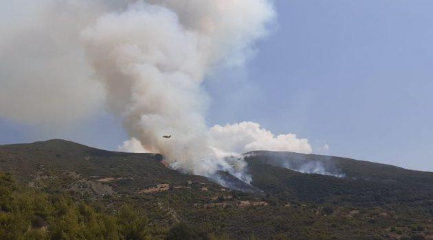 Πυρκαγιά μαίνεται στην Άνω Καλλιθέα Πατρών
