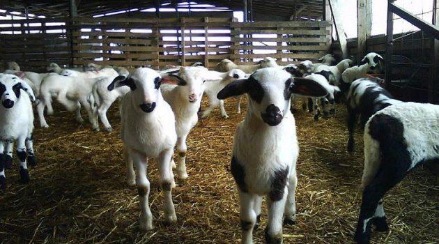 Ένωση Αγρινίου: Προθεσμία έκδοσης άδειας κτηνοτροφικών εγκαταστάσεων