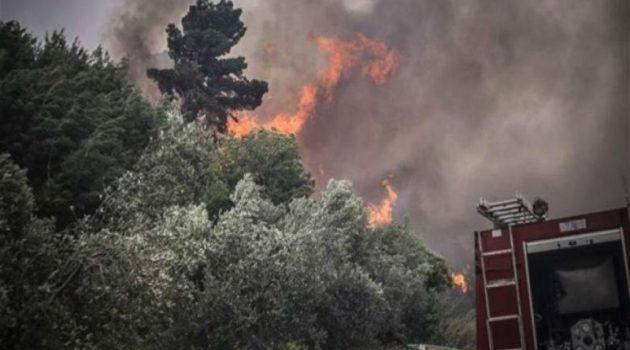 Υπό πλήρη έλεγχο η φωτιά στα Φραγκουλαίικα
