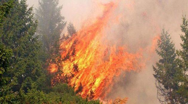 Φωτιά στην περιοχή Τσίπιανα Αρχαίας Ολυμπίας
