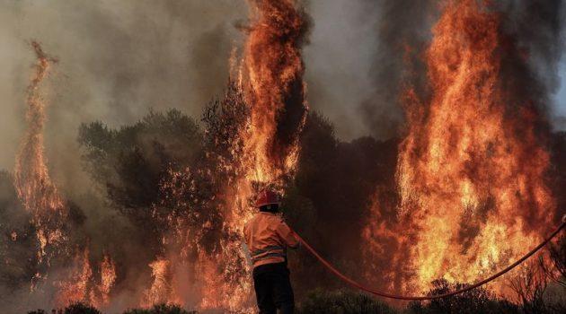 Ευρυτανία: Πήραν φωτιά τα έλατα – Μεγάλη κινητοποίηση