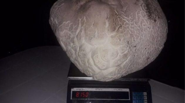 Μανιτάρι γίγας ανακαλύφθηκε στο Άργος Ορεστικό