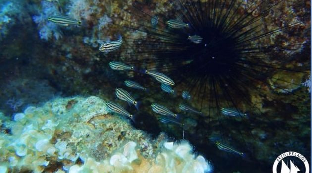 Ένα νέο είδος ψαριού εντοπίστηκε στην Ρόδο