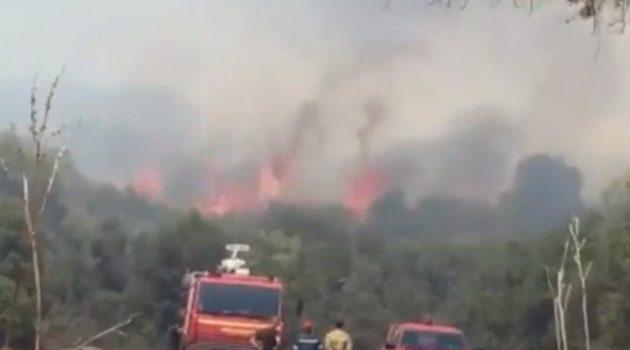 Καινούργιο: Κάηκε μισό στρέμμα χορτολιβαδικής έκτασης και πέντε ελαιόδεντρα