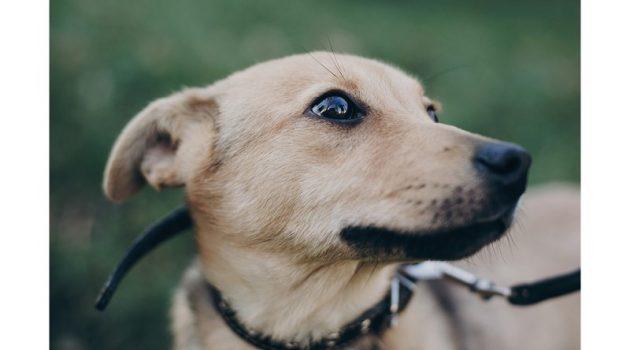 Σκύλος: Οκτώ πράγματα που τον κάνουν να φοβάται – Πως να τον βοηθήσετε