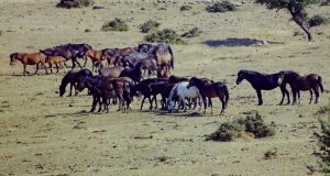 Η «άγρια δύση» της Αιτωλοακαρνανίας με τα ελεύθερα άλογα που…