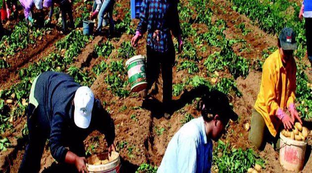 Μεσολόγγι: Συνελήφθη άνδρας για ληστείες σε βάρος αλλοδαπών εργατών γης