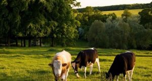 1 εκατ. ευρώ για τους Γενετικούς Πόρους στην Κτηνοτροφία