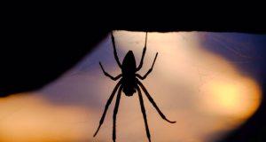 Νοσοκομείο Ρίου: Κινδυνεύει ασθενής από τσίμπημα μαύρης αράχνης