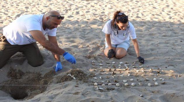 Φ.Δ./Λ.Μ.-Α.Ο.: Γεννητούρια χελωνώνCaretta σε Λούρο και Κοκκάλα