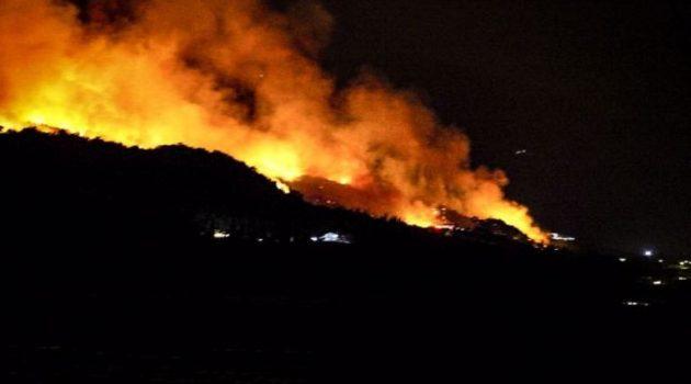 Μεγάλη πυρκαγιά σε δασική έκταση στην Τριανταφυλλιά