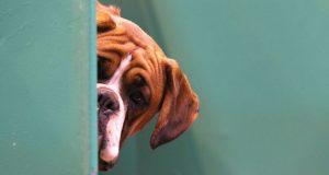 10 πράγματα που κάνετε και νευριάζετε τον σκύλο σας