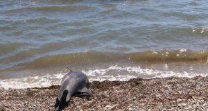 Νεκρό δελφίνι ξέβρασε η θάλασσα στο Σκάλωμα Δωρίδας (Photos)
