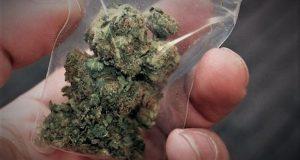 Συνελήφθη άνδρας στην Αμαλιάδα για καλλιέργεια και κατοχή ναρκωτικών