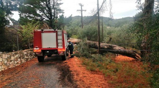 Κέρκυρα: Πτώσεις δέντρων και διακοπές ηλεκτροδότησης