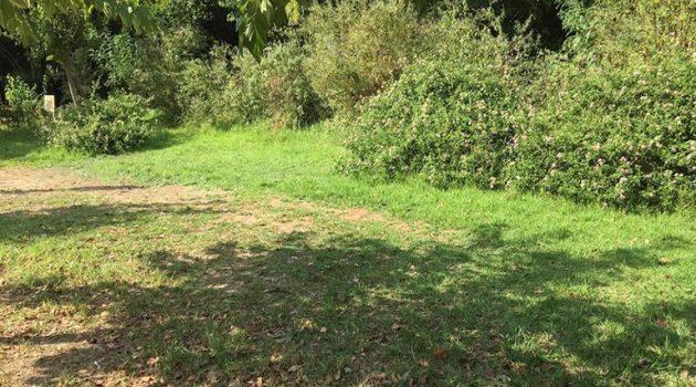 Εγκατάλειψη βρέφους: Η μητέρα το άφησε κάτω από ένα δέντρο