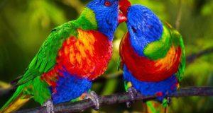 Γιατί οι παπαγάλοι μιλάνε;