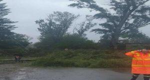 Κακοκαιρία «Ιανός»: Πτώσεις δέντρων σε Κατοχή, Νεοχώρι, Αστακό (Photos)
