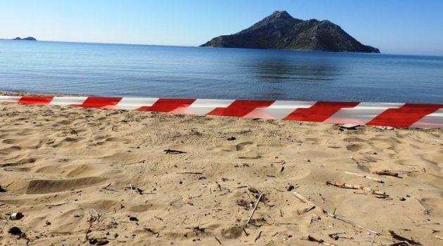 Τα πρώτα χελωνάκια Caretta Caretta στη λιμνοθάλασσα – Προσοχή από τους πολίτες