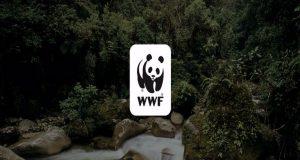 WWF: «Η φύση καταρρέει: 68% μείωση πληθυσμών άγριας ζωής από…