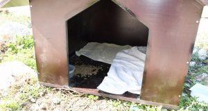 Αίτημα κατασκευής σπιτιών για αδέσποτα ζωάκια στο Δ. Πατρέων