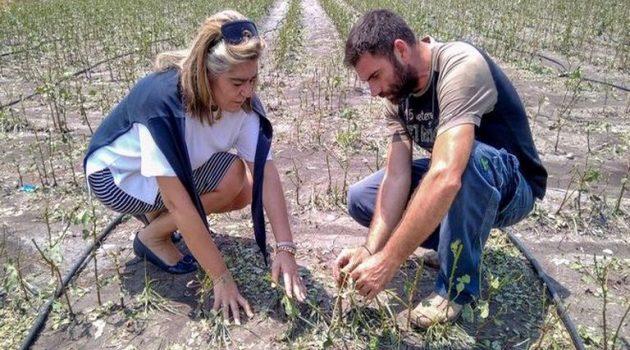 Ο.Π.Ε.Κ.Ε.Π.Ε.: Ποιοι αγρότες δεν θα πληρωθούν σήμερα