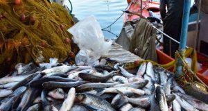 Τουλάχιστον 3.000.000 ευρώ «έρχονται» για τους αλιείς
