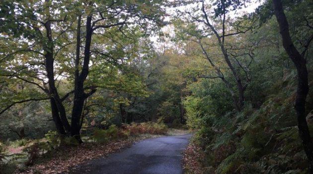 Βελόπουλος: Για την άμεση αποκατάστασης των οδικών προσβάσεων στον Αράκυνθο