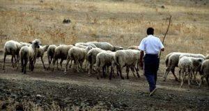 Α.Κ.Κ.ΕΛ.: Πήραν πίσω τα λεφτά που έδωσαν ενίσχυση στους κτηνοτρόφους