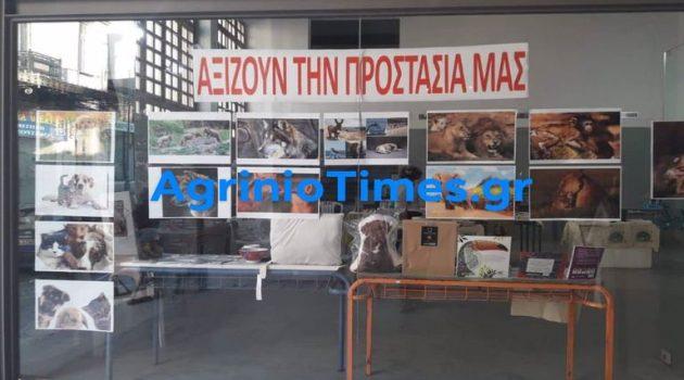 ΗΦιλοζωική Οργάνωση Αγρινίου πραγματοποιεί bazaar για τα αδέσποτα ζώα (Photos)