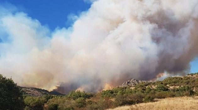 Έβρος: Φωτιά στον δρυμό της Δαδιάς – Πέρασμα μεταναστών η περιοχή