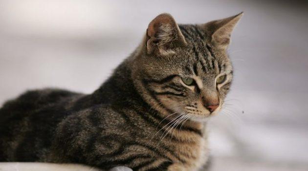 Πάτρα: Έσφαξαν με μαχαίρι οκτώ γάτες