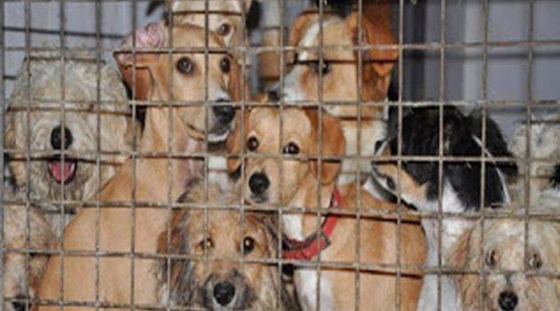 Αγρίνιο: Αυτοψία της αστυνομίας στη φάρμα των κακοποιημένων ζώων