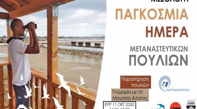 Το Μεσολόγγι γιορτάζει την Παγκόσμια Ημέρα Μεταναστευτικών Πουλιών