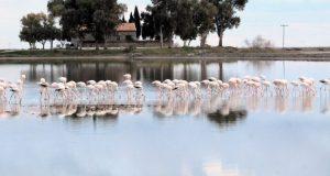 Υδρόβια στη λιμνοθάλασσα Μεσολογγίου – Αιτωλικού (Photos)