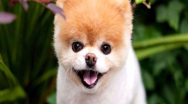 Ταυτοποίηση των ιδιοκτητών ζώων συντροφιάς