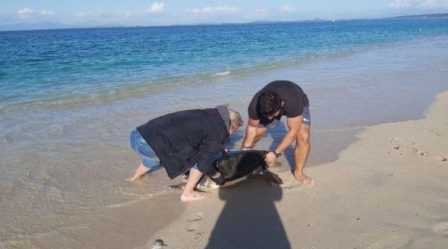Λευκάδα: Νεκρές χελώνες «Caretta – Caretta» (Photos)