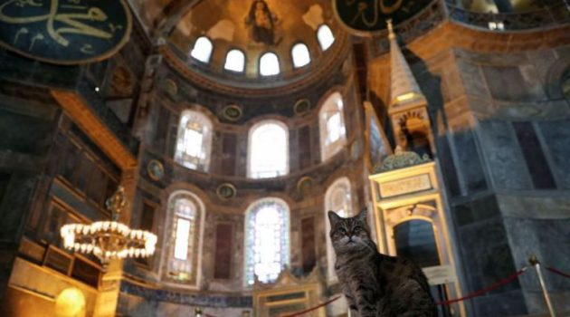 Πέθανε η Gli, η θρυλική γάτα της Αγίας Σοφίας