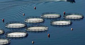 Ενέργειες Κ. Καραγκούνη για τις αποζημιώσεις των υδατοκαλλιεργητών της Αιτωλ/νίας