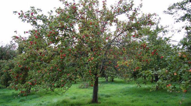 Eυκαιρία αύξησης των ελληνικών εξαγωγών φρούτων στη Γερμανία