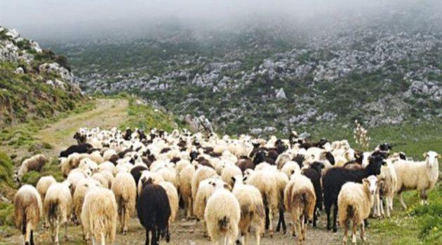 Ένωση Αγρινίου: Η απογραφή ζωικού κεφαλαίου συνεχίζεται
